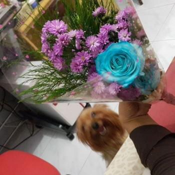 Bunga untuk pappo tercintahqiqiqi