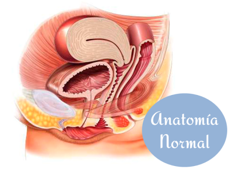 Anatomia Normal PP